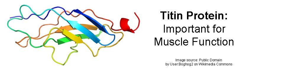 Titin Myopathy - All about Titin Protein, Titin Myopathy, Titinopathy, Titinopathies