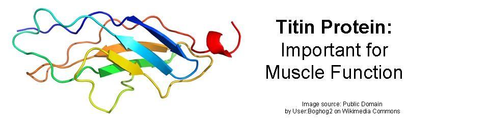 Titin Myopathy